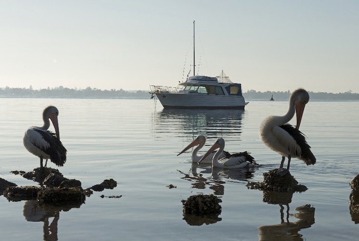 Pelicans rest in Wangi Wangi, Lake Macquarie