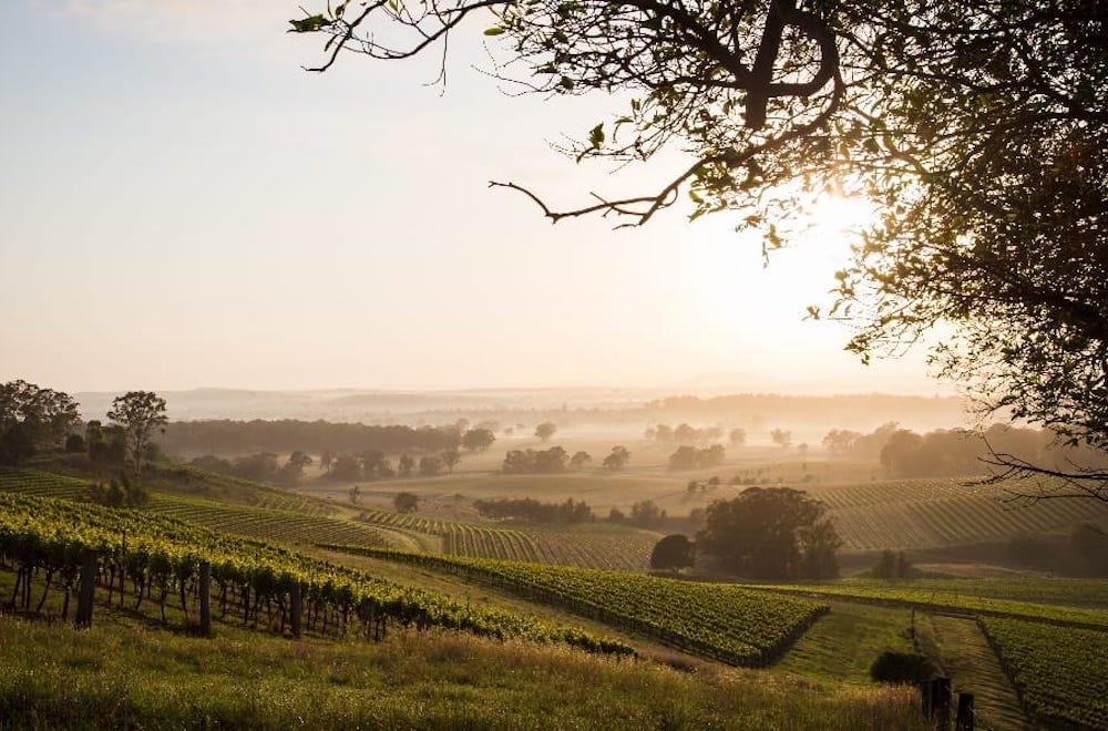 Hunter Valley vineyards at Sunset