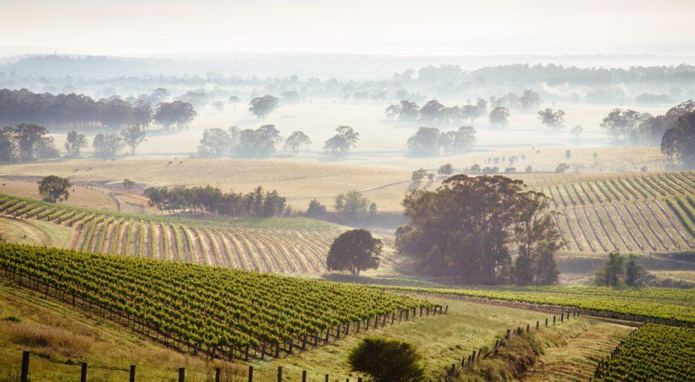 Hunter Valley Vineyards, NSW